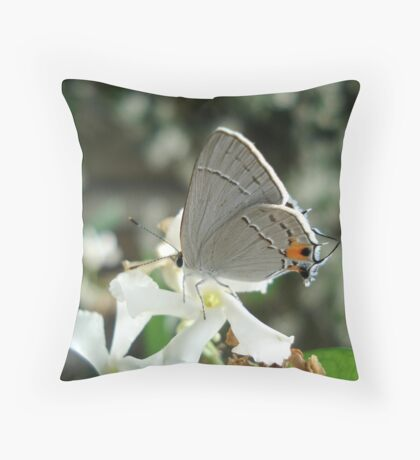 Gray Hairstreak on Jasmine Throw Pillow