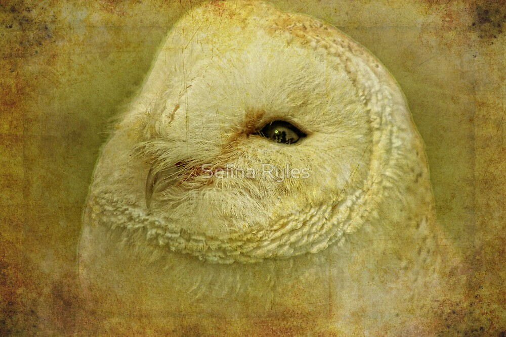 Owl  by Selina Ryles