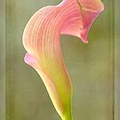 Calla Lily by Laura  Knight