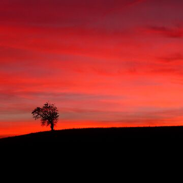 A Lonely Tree Observing the Sunset by adamredshaw