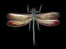 Medicine Wheel Totem Animals by Liane Pinel- Dragonfly by Liane Pinel