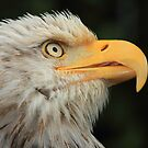 Eagle Head by blew12bandit