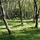 Glendalough Grove, Co. Wicklow, Ireland by thropots