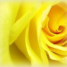 Sunshine - in a simple Rose by EdsMum