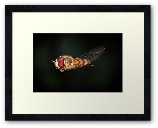 Flypast 2 by Gareth Jones