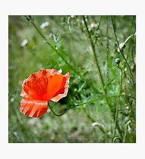 Poppy | 1 Photographic Print