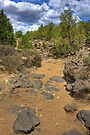 Dry Mountain Stream Bed by Bill Wetmore