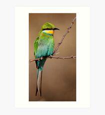 Swallowtailed Bee-eater (Merops hirundineus) Art Print