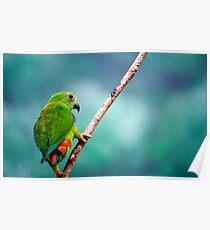 Little Green Bird Poster