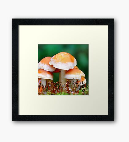 Can You See The Fairy? Framed Print