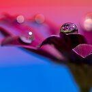 Purple Daisy Dream I by Melinda Gaal