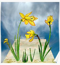 Daffodils Out of Bounds  Poster