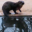 otter reflection by Cheryl Dunning