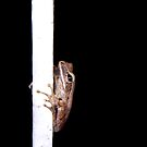 gymnast frog by lensbaby