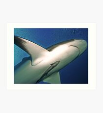 Reef Shark with Remora, Roatan Art Print