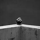 On the edge by Antony Pratap