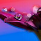 Purple Daisy Dream II by Melinda Gaal