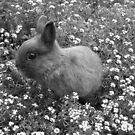 Bunny in Black & White by Michael John