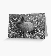 Bunny in Black & White Greeting Card
