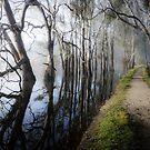 Fog on the lake, Rutherglen by Fran53