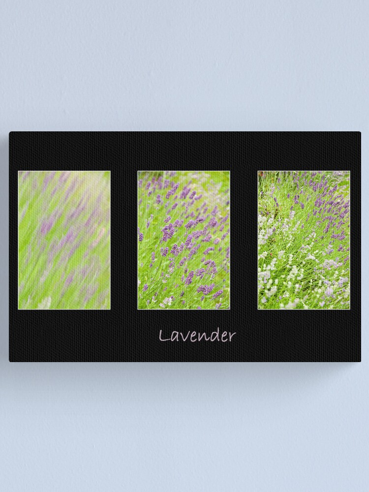 Alternate view of Lavender Trio Canvas Print