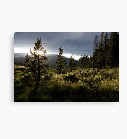 Summer evening in the Colorado mountains Canvas Print