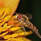 Pollination 31 by Gareth Jones