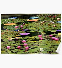 Water Lily Pond...Lotus-in-Motion Art Poster