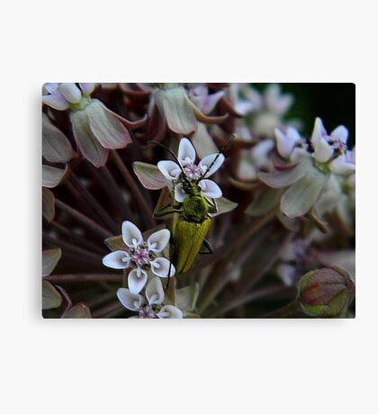 My First Bug Capture ! Canvas Print