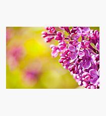 Spring lilac flowerets macro Photographic Print