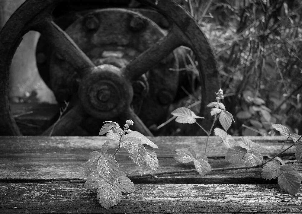Wandering Bramble by rosiephoto