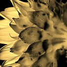 Split tone Sunflower - Sepia by glennc70000