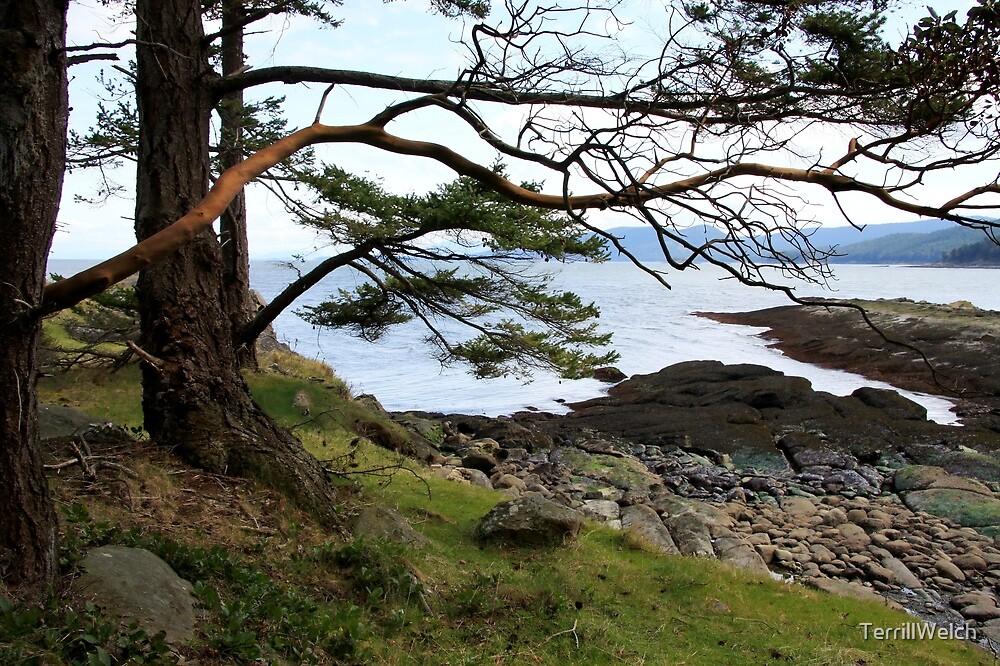 sea glimpse by TerrillWelch
