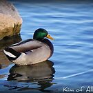 Duck on the Water  by Kimberly Darby