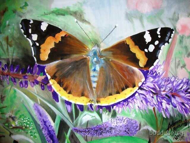 Admiral Butterfly by buddybetsy