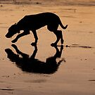Bella at the beach - dog silhouette by Jenny Dean