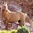 Wild Mustang Stallion by Kathy Cline