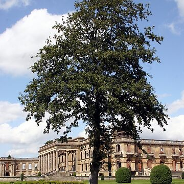The Tree at Witley Court by JohnDalkin