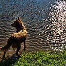SPARKLING SWIM by Helen Akerstrom Photography