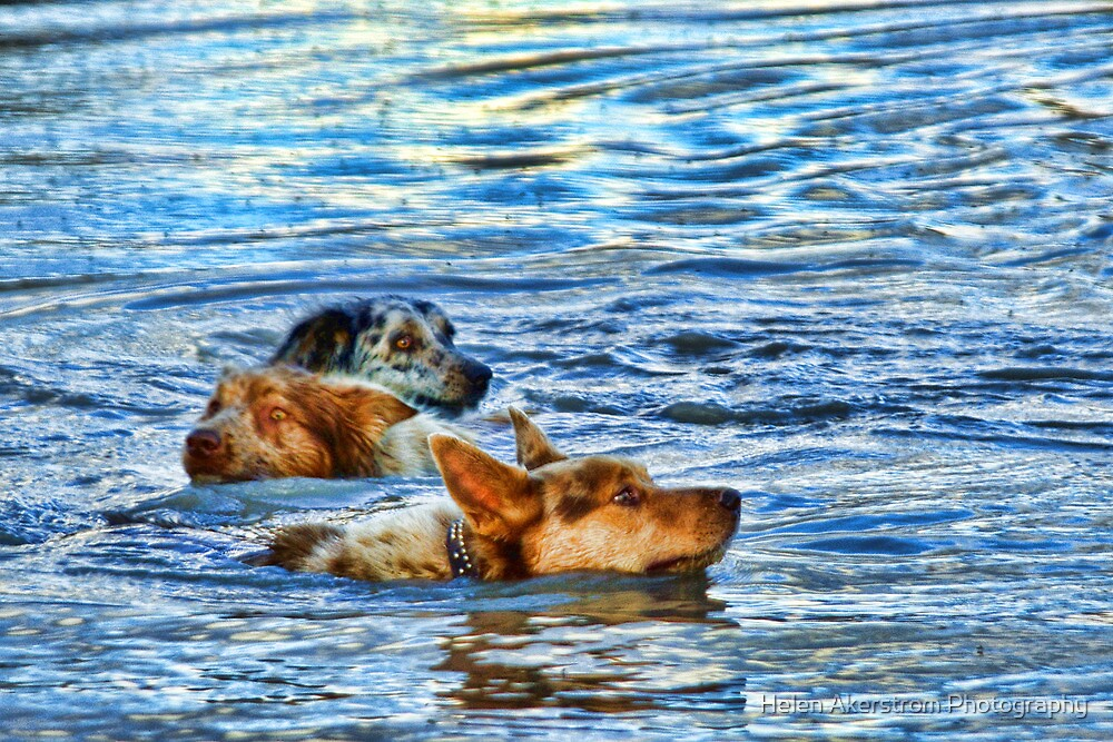 KOOLIE COOL OFF by Helen Akerstrom Photography