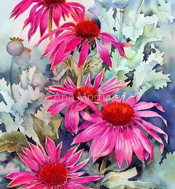 Echinaceas and poppy seed heads by Ann Mortimer