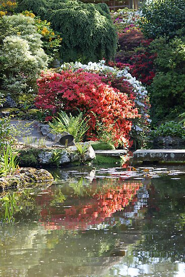 Japanese garden by LorrieBee
