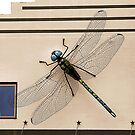 Dragonfly On Wall by SuddenJim