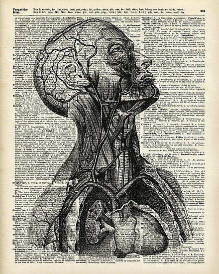 Medical Human Anatomy Illustration Over Old Book Page by DictionaryArt