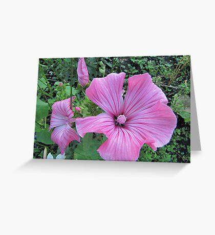 A dream in pink Greeting Card