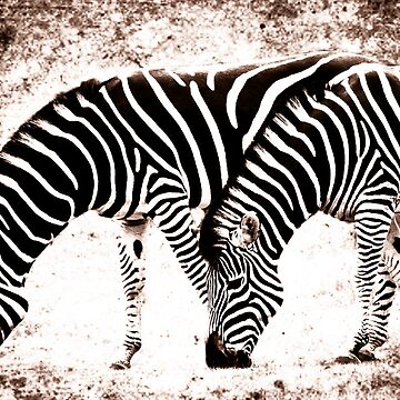 In Harmony - Zebra  by Foxfire