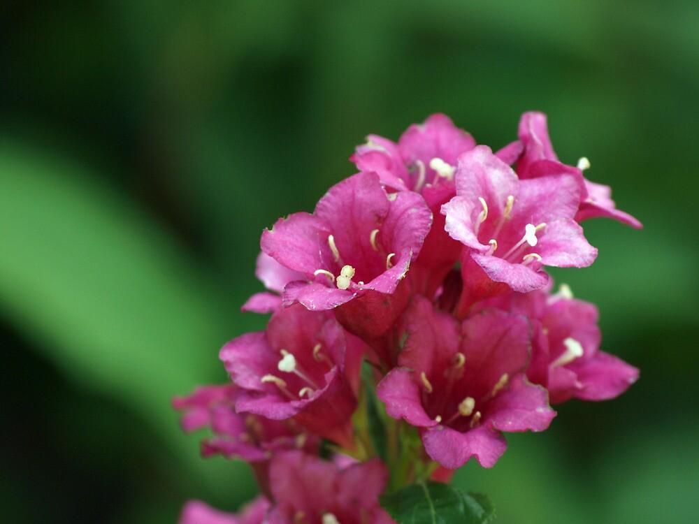 Tiny Flowers by Kimberly  Dugan
