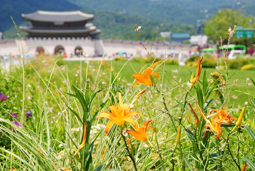 Seoul Flowers by Christopher Colletta