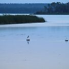 pelican view by Cheryl Dunning