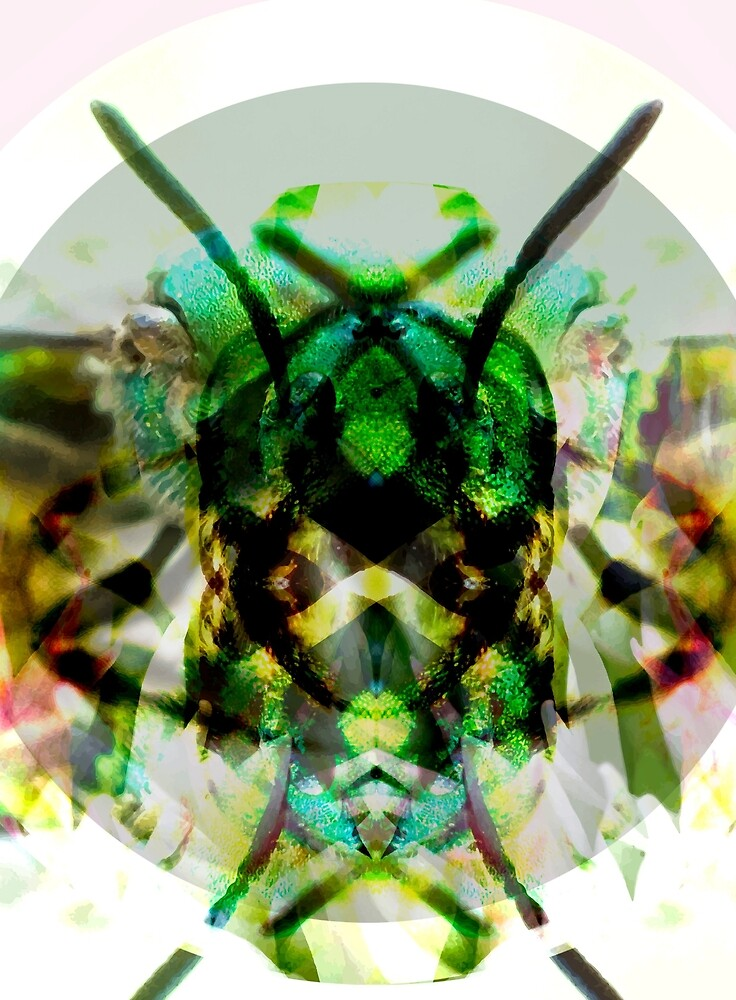 Insect II by judithollie